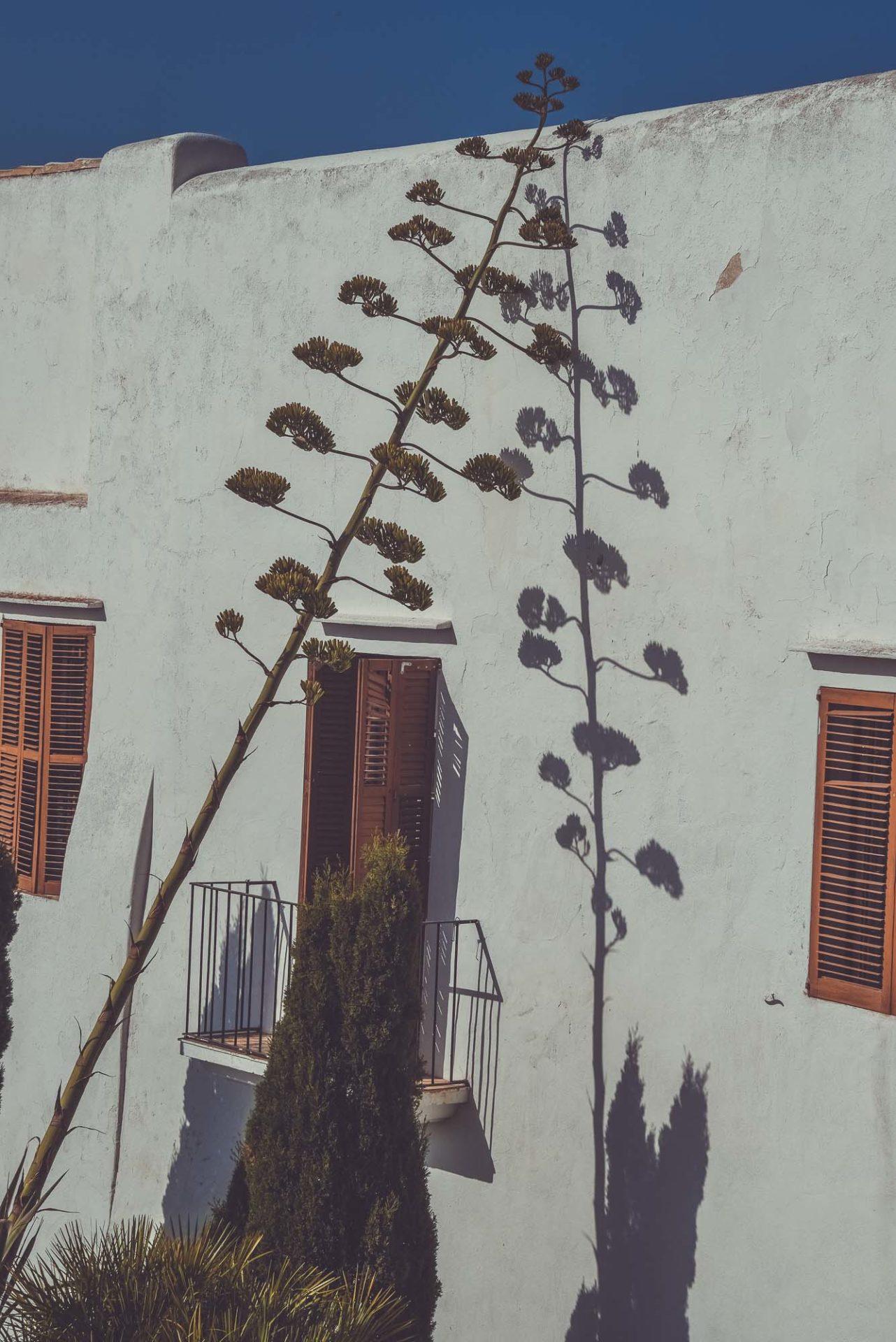 villa-Ibiza-38